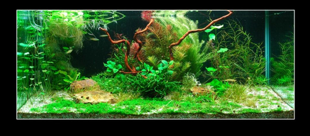 Aquascaping Aga Winner Easy Life